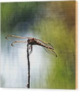 Perching Dragonfly Wood Print
