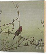 Perching Finch Wood Print