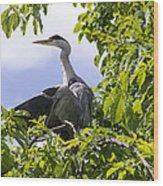 Perching Heron Wood Print