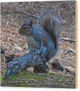 Perching Squirrel Wood Print