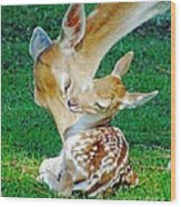 Pere David Deer And Fawn Wood Print