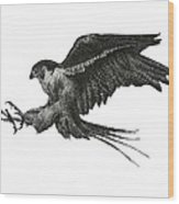 Peregrine Hawk Or Falcon Black And White With Pen And Ink Drawing Wood Print by Mario Perez