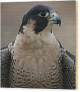 Peregrine Profile Wood Print