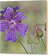 Perennial Geranium Wood Print