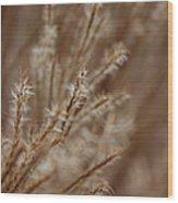 Perennial Grass Wood Print