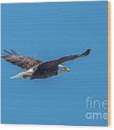Perfect Bald Eagle Wood Print