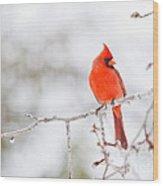 Perfect Cardinal Wood Print
