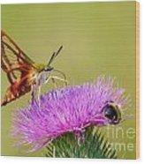 Perfect Hummingbird Moth Wood Print