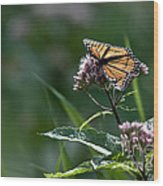 Perfect Monarch Wood Print