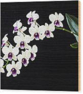 Perfect Phalaenopsis Orchid Poster Wood Print