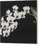 Perfect Phalaenopsis Orchid Wood Print