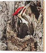 Perfect Pileated Pose Wood Print