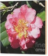 Perfect Pink Camellia Wood Print