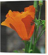 Perfect Poppy Wood Print