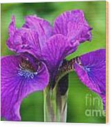 Perfect Purple Specimen Wood Print
