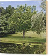Perfect Spot For A Picnic Wood Print