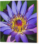 Perfect Water Lily Wood Print