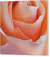 Perfection In A Peach Rose Wood Print