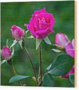 Perfectly Pink 2 Wood Print