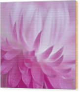 Perfectly Pink Wood Print