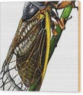 Periodical Cicada Wood Print