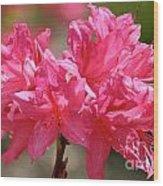 Periscope Pink Wood Print