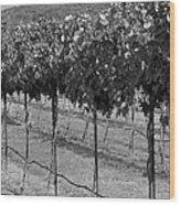 Perissos Winery Wood Print