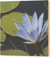 Periwinkle Lily Wood Print