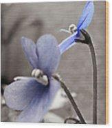 Periwinkle Petals Wood Print