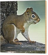 Perky Squirrel Wood Print