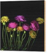 Persian Buttercups Ranunculus Asiaticus Wood Print