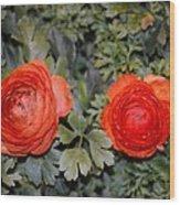Persian Buttercups Wood Print