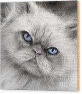 Persian Cat With Blue Eyes Wood Print