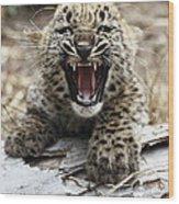Persian Leopard Cub Snarling Wood Print
