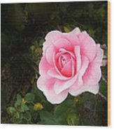 Personally Pink Wood Print
