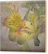 Peruvian Lily Framed Wood Print