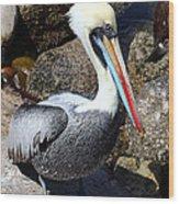 Peruvian Pelican Wood Print
