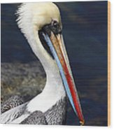 Peruvian Pelican Portrait Wood Print