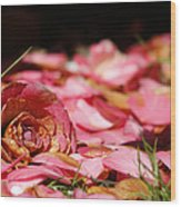 Petals 2 Wood Print