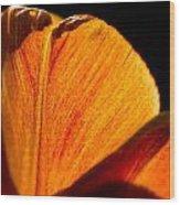 Petals And Sun Wood Print