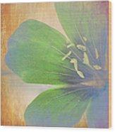 Petals Of Color Wood Print