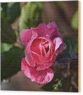 Petals Of Dew Wood Print