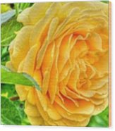 Petals Of Sunshine Wood Print