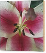 Petals Of Watermelon Wood Print by Mike Podhorzer