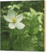 Petals Of White Wood Print