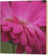 Petals Pink Wood Print