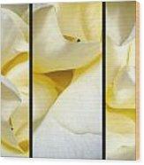 Petals Triptych Wood Print