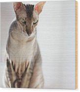 Peterbald Sphynx Cat Wood Print