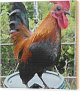 Petey The Old English Game Bantam Rooster Wood Print