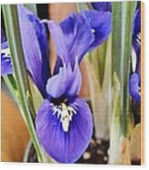 Petite Dutch Irises Wood Print